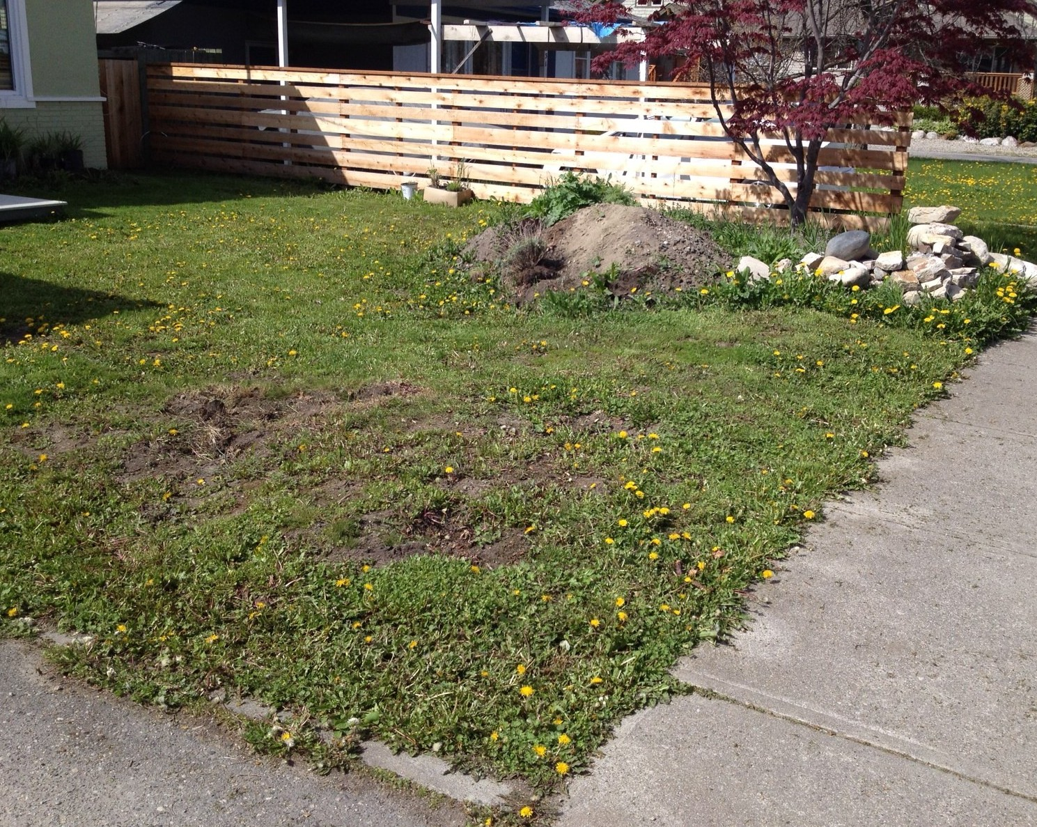 Learning from the landscape cultivating a sense of place for Grass shrubs landscaping