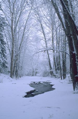 Trepanier Creek - photo by N.M. Anthes